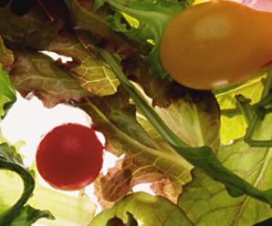 Grain Free & The Food Pyramid
